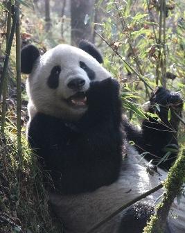 Orgasms through panda bear thumb evolution pretty extreme